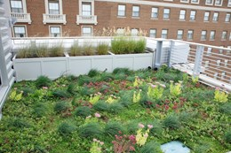 Plug Planted Extensive Green Roof System - Sedum