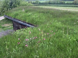 Plug Planted Extensive Green Roof System - Wildflower