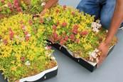 LiveRoof® Hybrid Modular Green Roof System