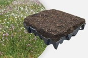 ANS GrufeKit Green Roof System - Brown Wildflower