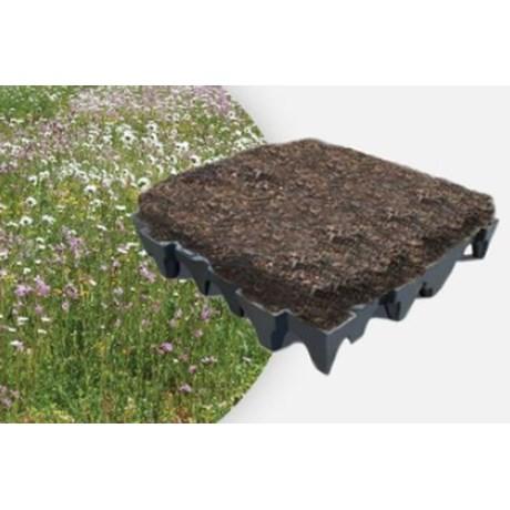 ANS GrufeKit Green Roof System - Brown Wildflower