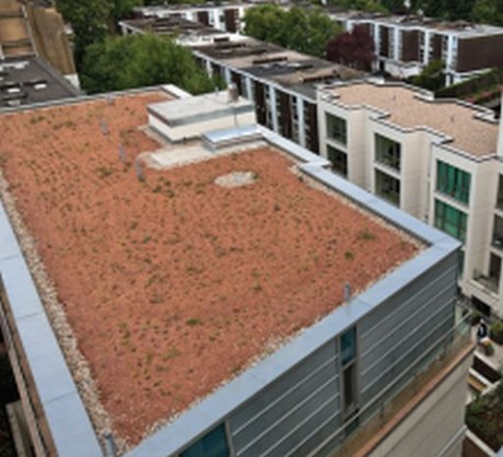 PermaQuik Pre-Grown Green Roof System- Quantum (Pure)