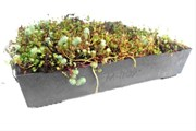 M-Tray Modular Green Roofing System