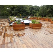 Brimstone Ash Decking