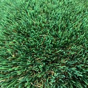 Elite Grass