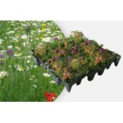 ANS GrufeKit Green Roof System - Sedum and Wildflower