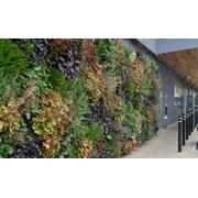 LivePanel® Living wall (External)