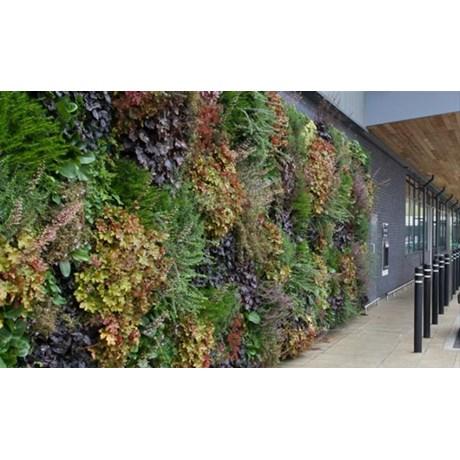 LivePanel® Living wall (Internal)