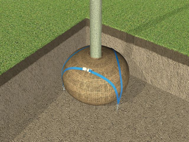 Arborguy Root Ball Guying