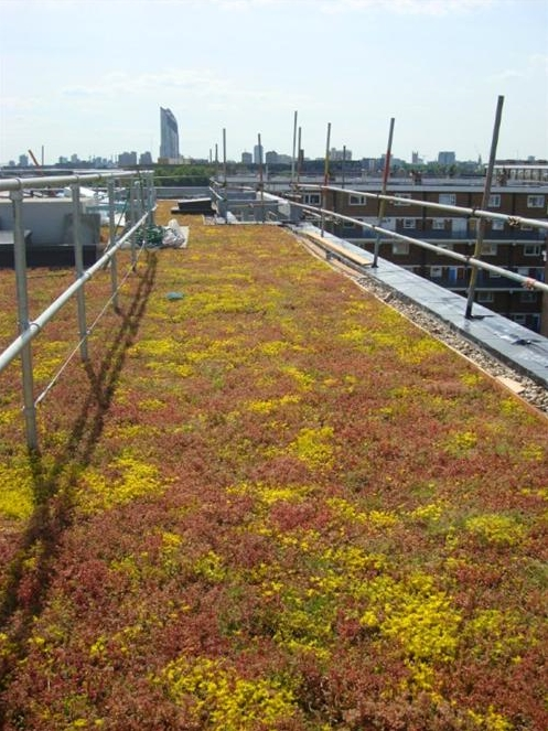 Green-tree Extensive Roof Garden Substrate