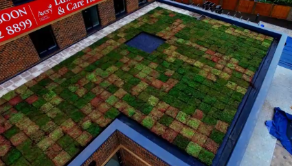 M-Tray® Instant Green Roof - Parklodge Care Home