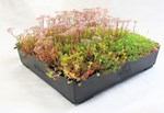 M-TRAY® Modular Extensive Green Roof System